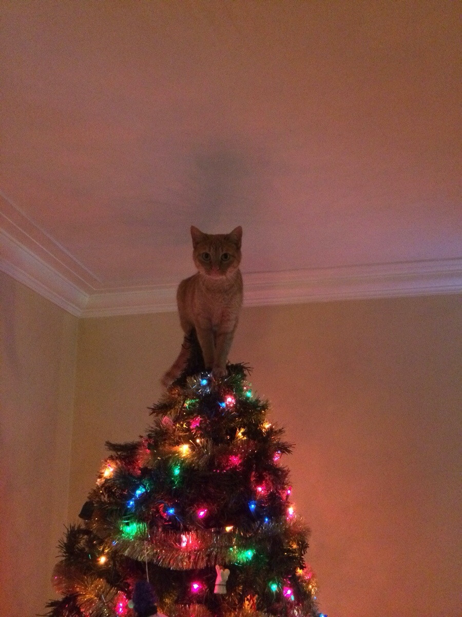 funny-picture-cat-tree-star