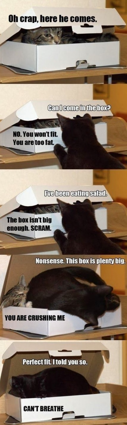 funny-picture-cats-box-fat-fit