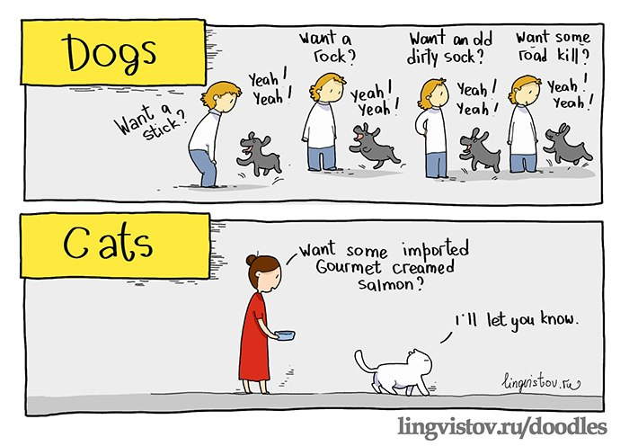 Differences Between Dogs and Cats: Learn What Makes Each One Special