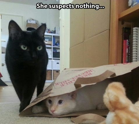 funny-picture-cats-suspect-nothing