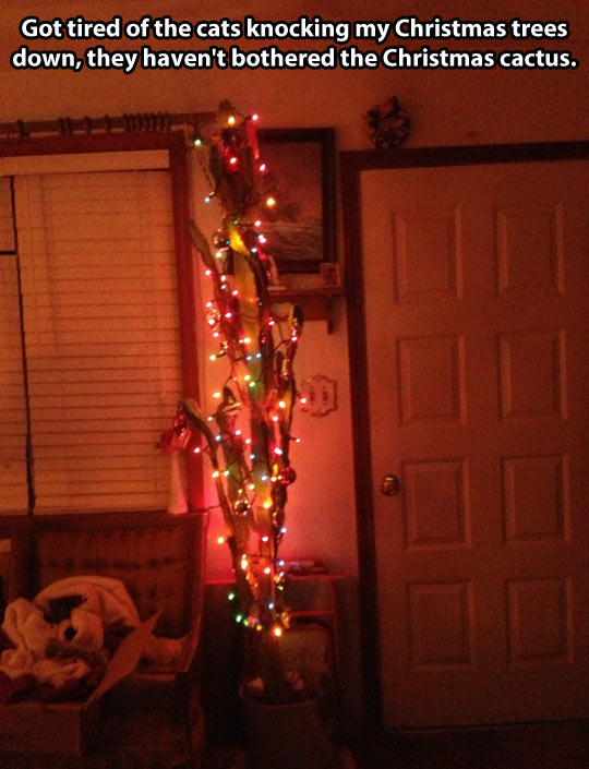 funny-picture-christmas-cactus-lights-cats
