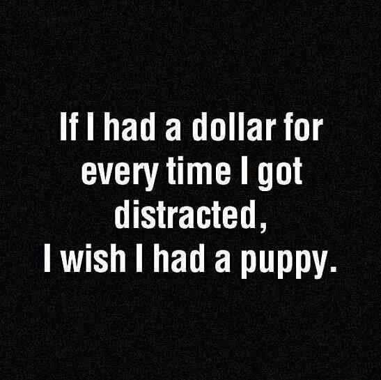 funny-picture-distracted-puppy