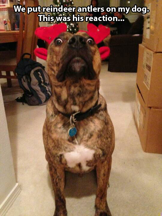 funny-picture-dog-antlers-reaction-surprise-Christmas