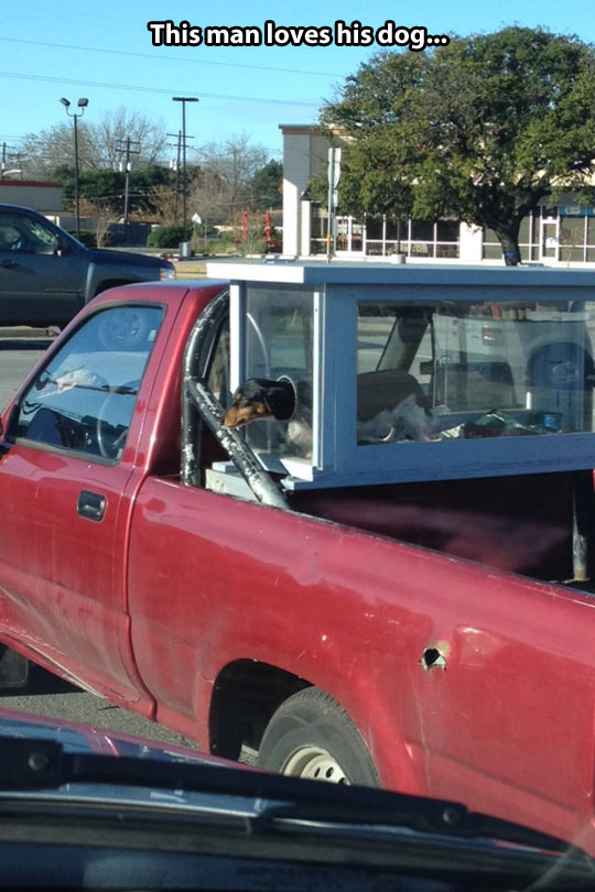 funny-picture-dog-cage-truck-head