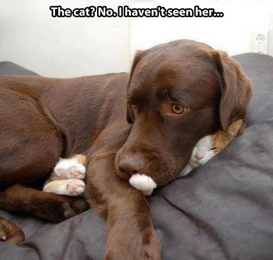 funny-picture-dog-cat-hidden-bed