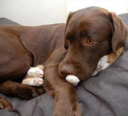funny-picture-dog-cat-sleeping