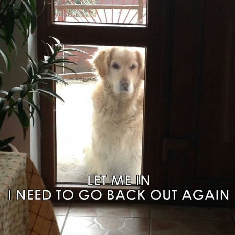 funny-picture-dog-door-back-out