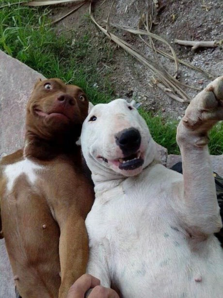 funny-picture-dog-selfie