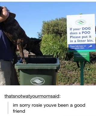 funny-picture-dog-sign-bin