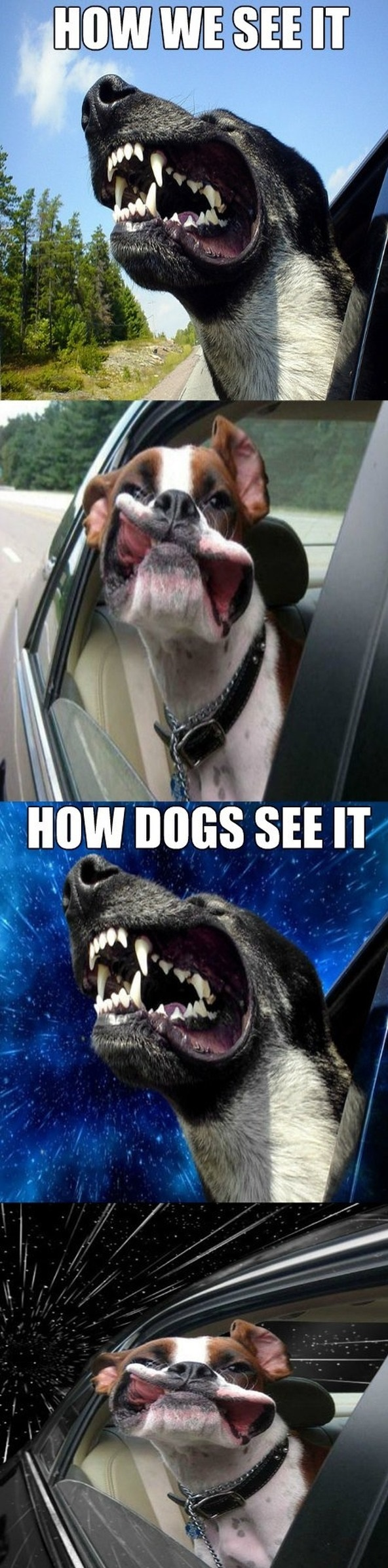 funny-picture-dog-wind