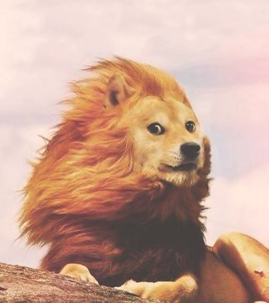 funny-picture-doge-Photoshop-lion-majestic