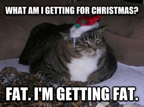 funny-picture-fat-cat-christmas