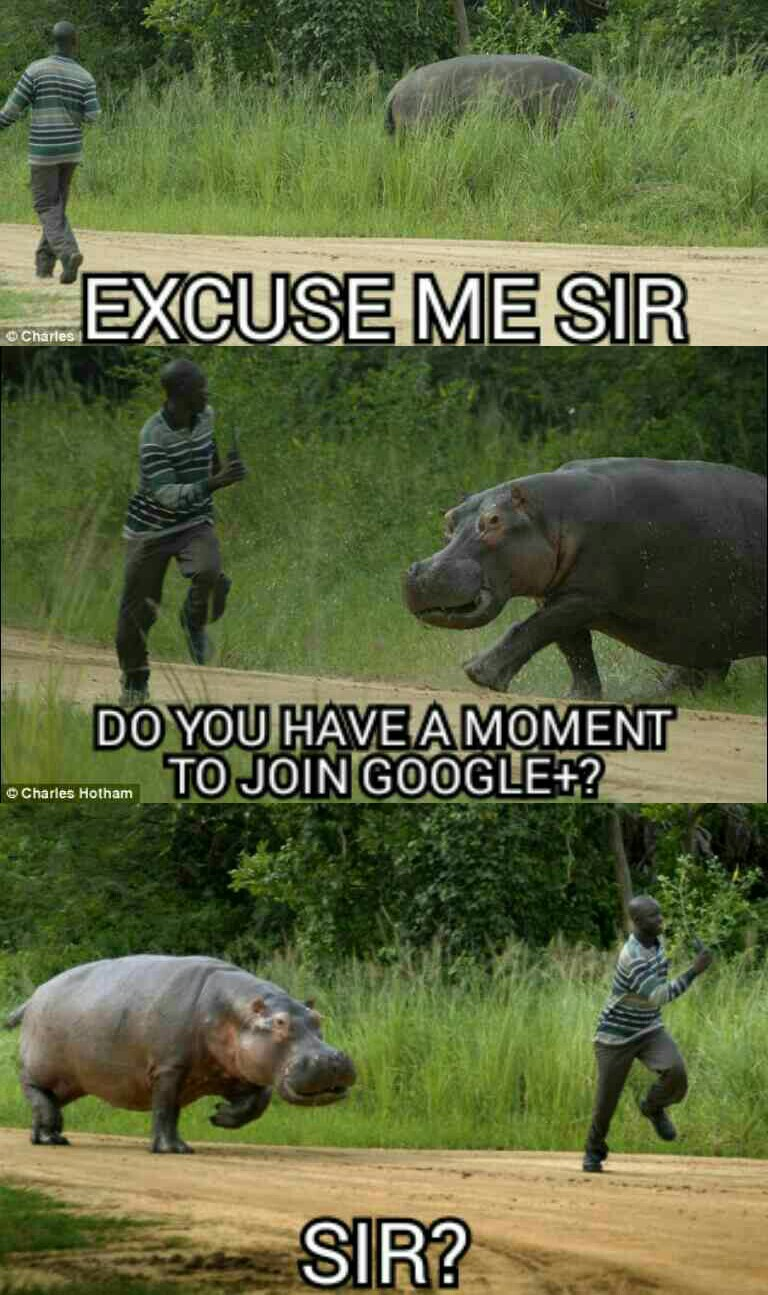 funny-picture-google-chase-hippo