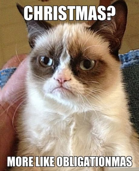 Christmas Funny Animals Cats Pics Pictures Grumpy