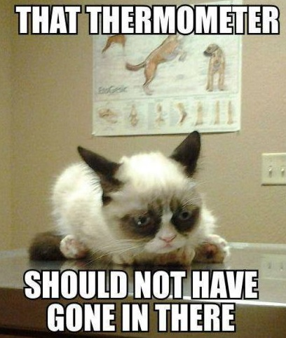 funny-picture-grumpy-cat-thermometer