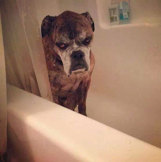 funny-picture-grumpy-dog