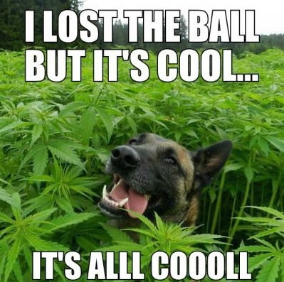 funny-picture-high-dog