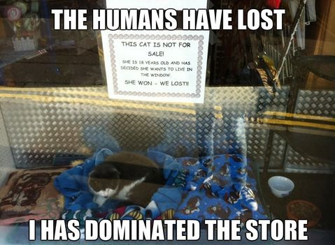 funny-picture-humans-lost-cat