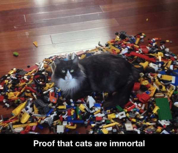funny-picture-immortal-cats