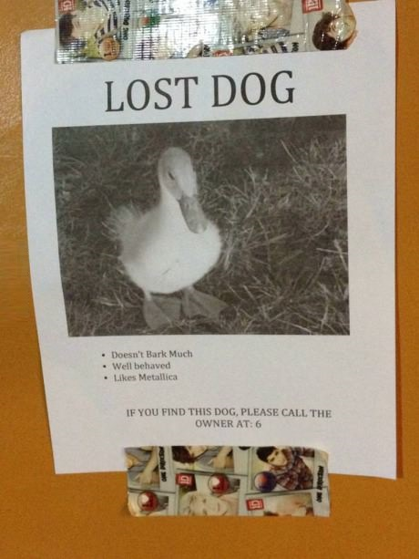 Help find the missing dog