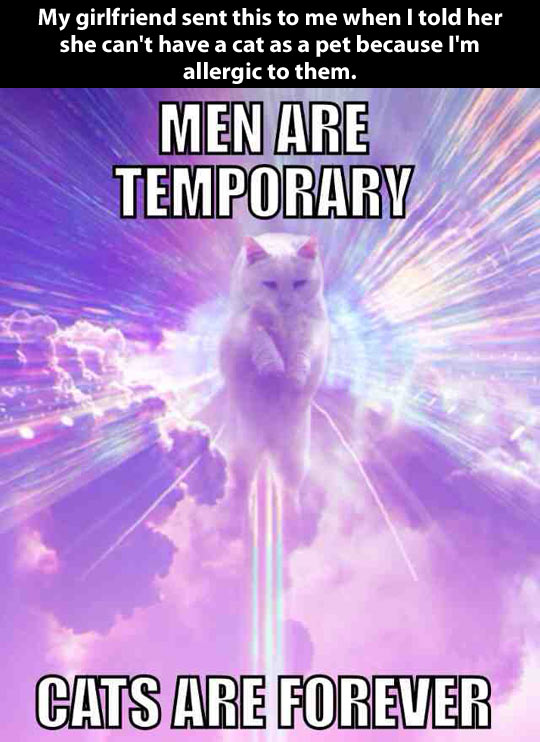 funny-picture-men-cats-love-girlfriend