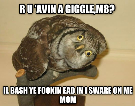funny-picture-owl-eyes-head-brown