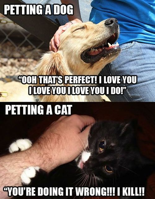 funny picture petting dog cat