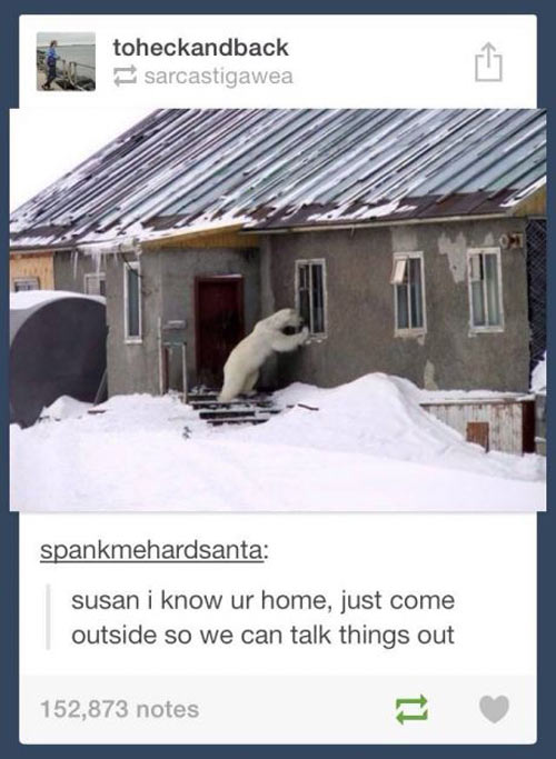 funny-picture-polar-bear-window-house