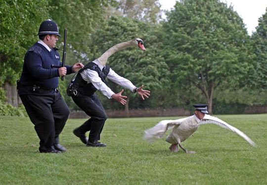 funny-picture-police-swap-faces-switched-animals