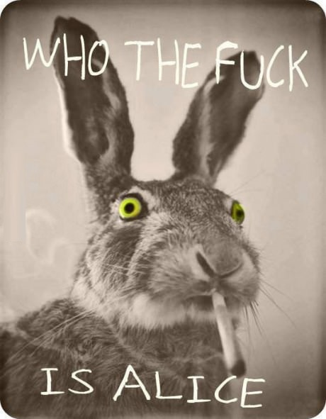 funny-picture-rabbit-high-alice-wonderland