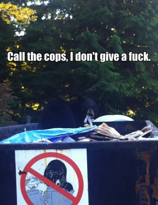funny-picture-sign-bear-forbidden-trash