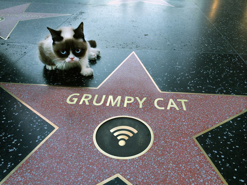 funny-picture-walk-of-fame-grumpy-cat