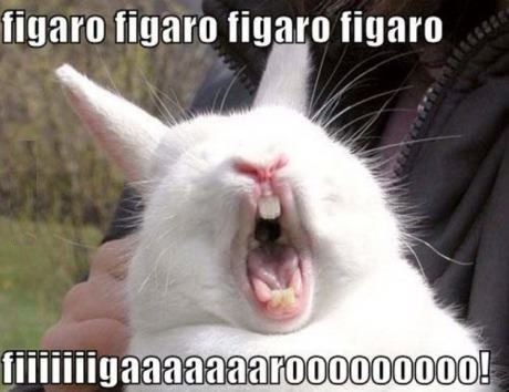 funny-pivture-rabbit-figaro-song