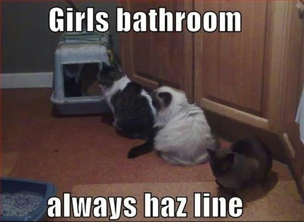 Bathroom Jokes morning jokes (20 pics)