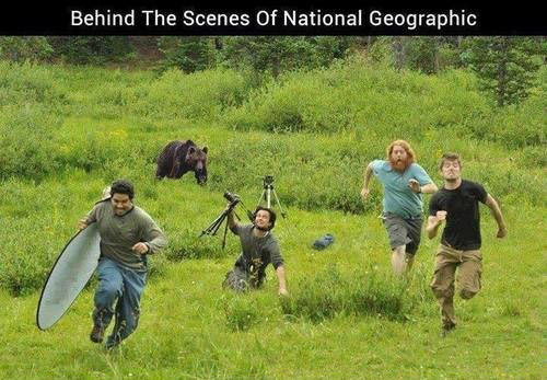 funny-picture-National-Geographic-bear-running