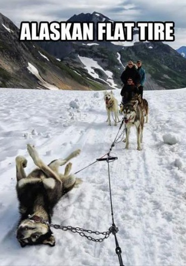 funny-picture-alaska-flat-tire