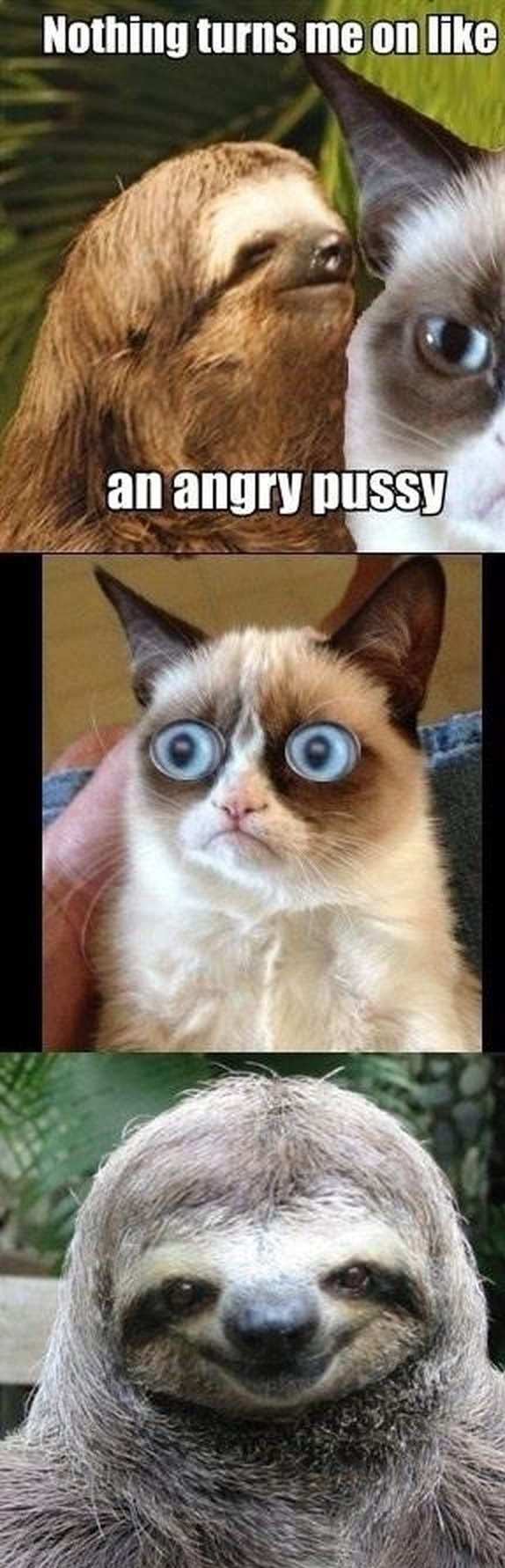 Funny Picture Angry Pussy Grumpy Cat