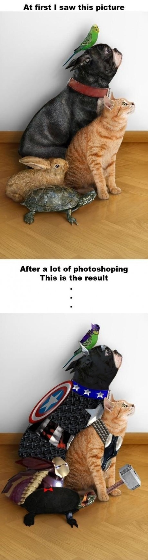 funny-picture-avengers-animals