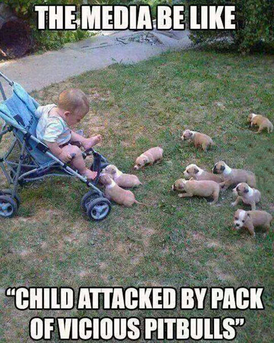 funny-picture-baby-baby-dog-pitbull-media
