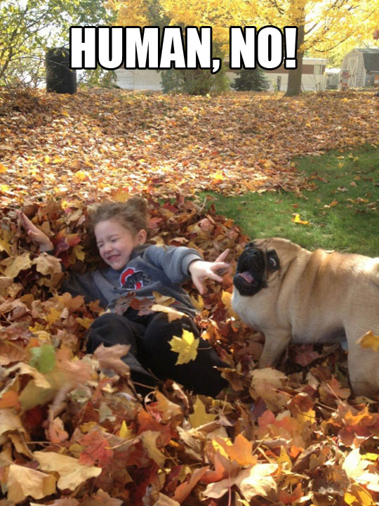funny-picture-backyard-kid-dog-without-neck