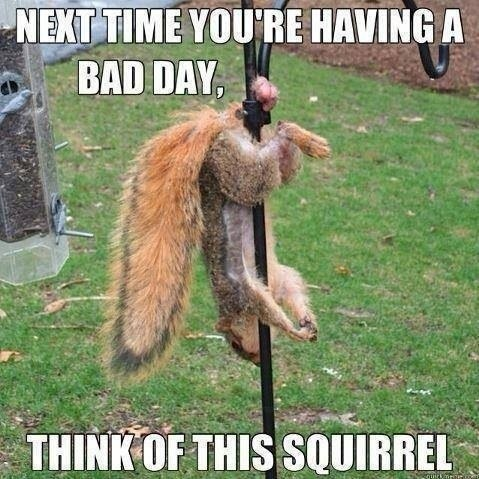 funny-picture-bad-day-squirrel.jpg