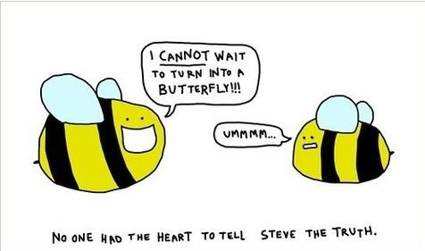 funny bee quotes