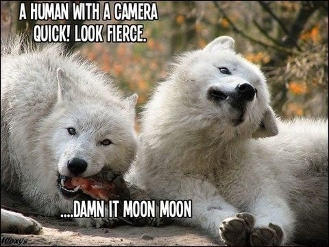 funny-picture-camera-moon-moon