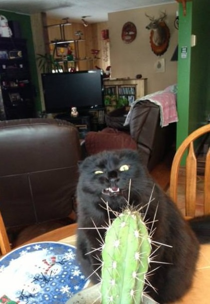 funny-picture-cat-cactus-face