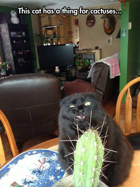 funny-picture-cat-cactuses-face-kitten