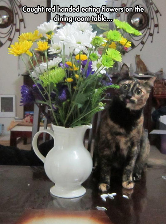 funny-picture-cat-eating-flowers-table