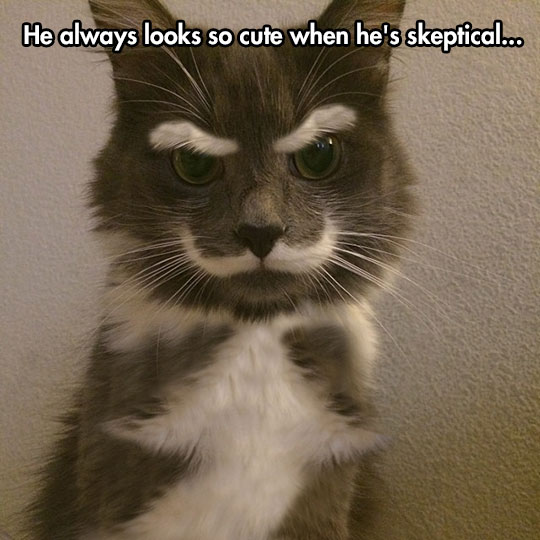 funny-picture-cat-fur-mustache-eyebrows-face