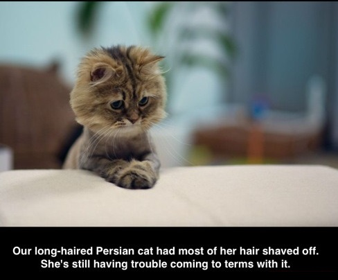funny-picture-cat-hair-trouble