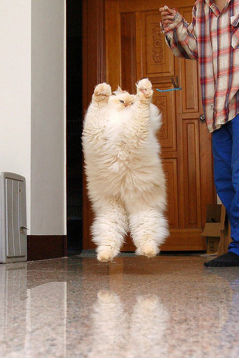 funny-picture-cat-kitten-kitty-furry