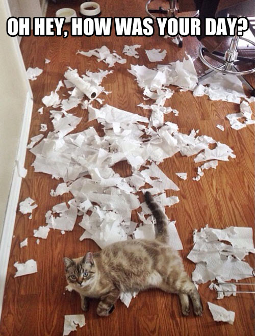 funny-picture-cat-paper-kitten-room